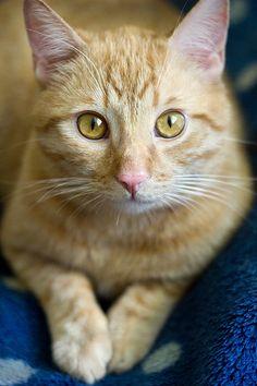 Cat by BloQ., via Flickr