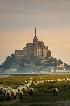 Surreal beauty.  Mont St Michel, Normandy, France