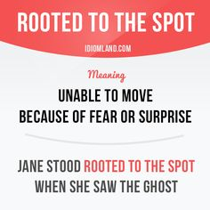 Spot  definition of spot by The Free Dictionary