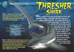 Name: Thresher Shark Category: Monsters of the Deep Card Number: 70 Front: Thresher Shark Monsters of the Deep Card 70 front Back: Thresher Shark Monsters of the Deep Card 70 back Trading Card: Thresher Shark, Types Of Sharks, Shark Facts, Interesting Animals, Underwater Creatures, Wild Creatures, Animal Species, Marine Biology, Animal Facts