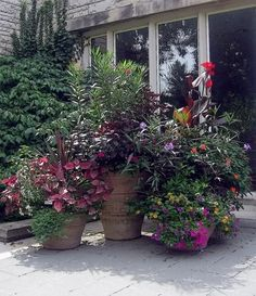 6 Patio Pots Designs - Dig This Design Patio Plants, Outdoor Planters, Garden Planters, Outdoor Gardens, Garden Fun, Container Plants, Container Gardening, Plant Containers, Summer Flowers