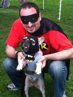 Roxy as Batman.  Home made costume.  French Bulldog.
