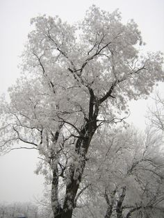 the trees dress in icy lace....
