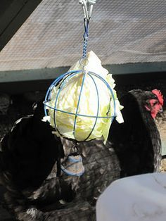 Tilly's Nest: What Can Chickens Eat?  Great article on what to feed and not feed your chickens!