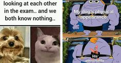 Dog Memes, Pet Dogs, Haha, Funny Pictures, Family Guy, Animals, Fictional Characters, Guys, Fanny Pics