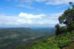 View from Casa del fauno, Munnar