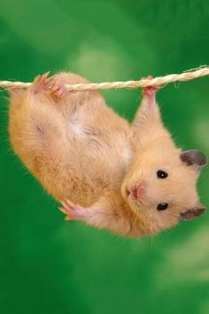 18 Adorable Animals Just Chilling Upside Down
