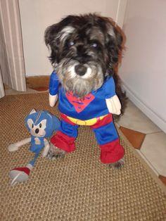 Renos the superdog