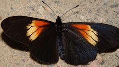 Resultado de imagen para animales de la region andina