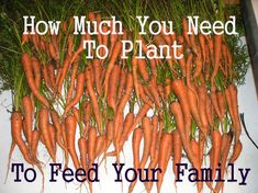 how much to plant for my family