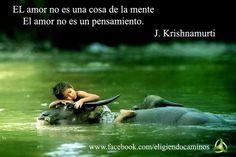 amor krishnamurti