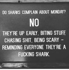 Do sharks complain about monday? No. They're up early, bitting Stuff, chasing shit, being scary - reminding everyone they're a fucking shark. - Imgur