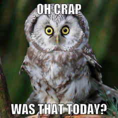 Funny Owl Meme Was That Today