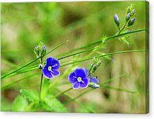 Summer feeling by svetlanistaya. Beautiful violet flower on blurred background. #Svetlanistaya #Flowers #CanvasPrint #HomeDecor