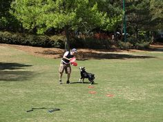 Atlanta is pet friendly. Centennial Olympic Park is a great place for dog walking and sight seeing. Pin provided by Mandarin Oriental, Atlanta: http://www.mandarinoriental.com/atlanta/