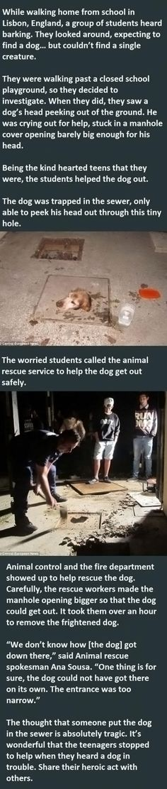 Inspiring story! #dogs