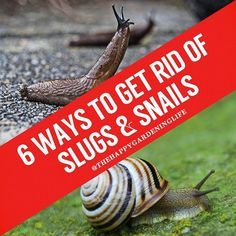 Need some quick and simple tips on how can naturally get rid of slugs and snails in your garden? Go ahead and check these awesome tips at https://www.instagram.com/p/BKv7TBcgDcr/