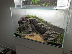 Planted Aquarium : Photo