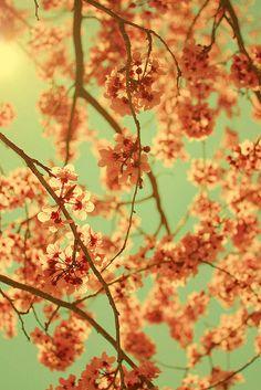 Vintagey blossoms