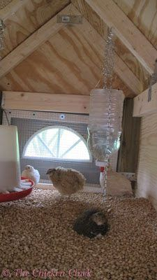 The Chicken Chick®: Building our Quail Coop homemade waterer Raising Quail, Raising Chickens, Portable Chicken Coop, Diy Chicken Coop, Chicken Chick, Chicken Runs, Backyard Birds, Chickens Backyard, Backyard Farming