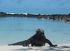 Galápagos, iguana marina, foto de nuestra estudiante Dhamee Tailor