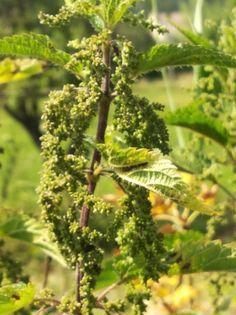 Parsley, Herbs, Smoothie, Nature, Plants, Gardening, Food, Fitness, Naturaleza