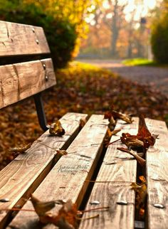 Have a seat and breathe in some Autumn-ness!!