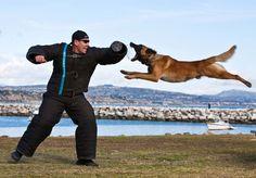 Flying lessons anyone? Police K9s are amazing athletes!!