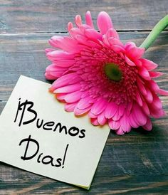 Good Morning In Spanish, Good Morning Funny, Good Morning Greetings, Good Morning Good Night, Good Morning Quotes, Good Day Messages, Phrase Of The Day, Cute Cartoon Pictures, Beautiful Pools