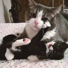 """Help me"" - Mama cat"