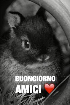 Bunny love buongiorno amici ❤️