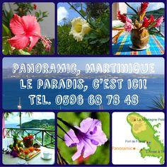 Et voila: encore quelques images captées dans le jardin de Panoramic...
