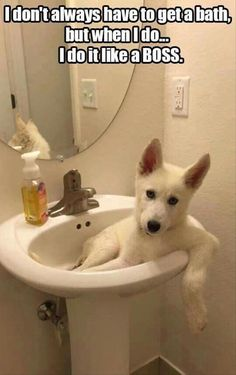Funny Animal Pictures Of The Day 22 Pics #dogsfunnyhumor
