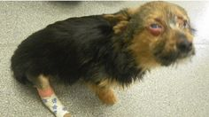 CHUNKY WILL SURVIVE BUT OTHERS WON'T. PLS SIGN FOR LIFETIME BAN ON THOSE WHO ABUSE ANIMALS!