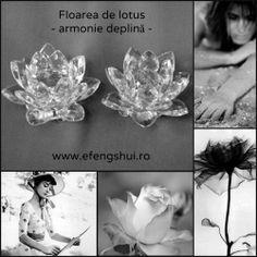 FLOAREA DE LOTUS - Este asociată cu puritatea, pacea, armonia, norocul ceresc, sinceritatea, veselia și fericirea. Este un simbol al dragostei și al prieteniei. Activează claritatea și pacea minții. Folosite în pereche de câte două simbolizează...http://www.efengshui.ro/categorii/floare-de-lotus.php