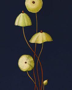 L'anatomie des plantes par Katie Scott