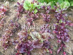 Как использовать скошенную газонную траву на огороде