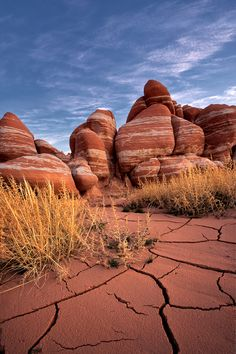 Desert Walk   Arizona (by Chris Moore)