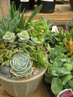 Cactus and Succulent Dish Garden by Green Acres Nursery and Supply - Roseville and Sac, via Flickr