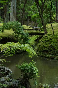 New post on tempetes Beautiful World, Beautiful Places, Beautiful Pictures, Christianity In Japan, Contemporary Garden, Walk In The Woods, Tree Forest, Belleza Natural, Natural World