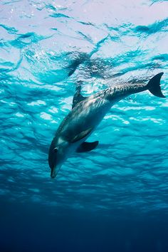 Wild dolphin underwater ~ By Vitaliy Sokol »                                                                                                                                                      もっと見る