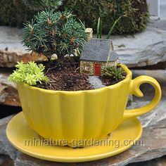 Microgarden In Teapot: #fairygarden #fairyhouses