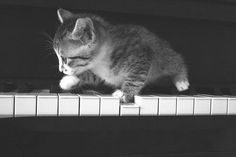 kitten playing the piano - our cats still love to do this after all these years