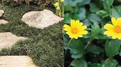 Quelles plantes couvre-sol peuvent remplacer le gazon ?