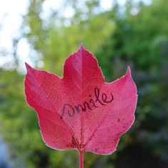 Leaf Quotes, Buddhist Quotes, Thich Nhat Hanh, Leaves, Calligraphy, Smile, Rose, Flowers, Plants