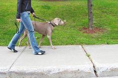 Como ensinar o cachorro a não puxar a guia #cachorro