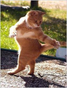 dancing cats 015