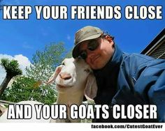 I finally found my life motto! Funny Animal Memes, Funny Animals, Cute Animals, Cute Goats, Funny Goats, Goat Toys, Show Goats, Goat Care, Boer Goats