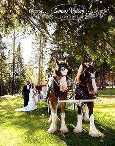 Fairly Tale Weddings at Bear Tree - Pittsburg NH