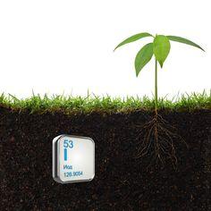 йод для полива растений How To Dry Basil, Herbs, Exterior, Gardening, Home, Agriculture, Plant, Garten, Herb